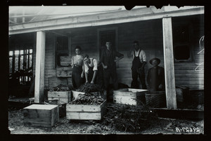"""Workers with cartons of """"fancy ferns"""", Shrewsbury, MA"""