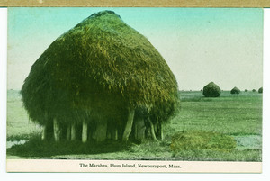 Hay stacks on marshes, Plum Island, Newburyport, Mass., undated