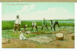Men and boys digging clams, Provincetown, Mass., undated