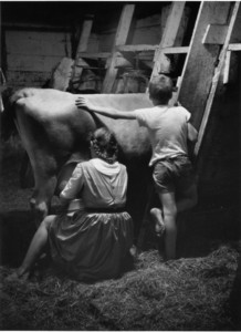 Evening chores, Webster, N.H., 1955