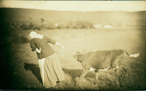C. Alice Baker in costume as a woman dragging a calf, Deerfield, Mass., 1880s
