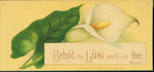 New Year's card, depicting a calla lily, 1876