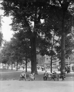 Trees on the west side of Tremont St. Mall looking northwest, Boston Common, Boston, Mass., August 3, 1914
