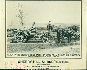 Advertisement for Cherry Hill Nurseries, West Newbury, Mass., undated