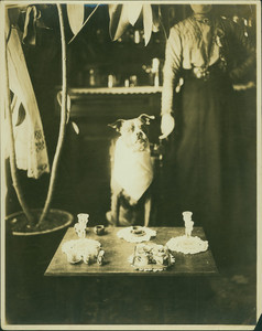 Dog sitting at table, location unknown, undated