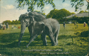 Elephants, Tony and Waddy, at Zoo, Franklin Park, Boston, Mass.