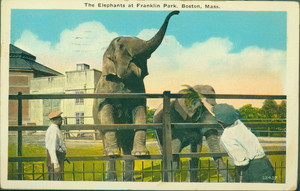 The elephants at Franklin Park, Boston, Mass.