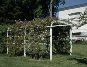 Arbor with roses, Governor John Langdon House, Portsmouth, N.H.