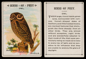 Birds of prey, owl, location unknown, undated