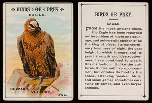 Birds of prey, eagle, location unknown, undated