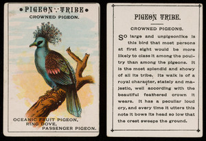 Pigeon tribe, crowned pigeon, location unknown, undated