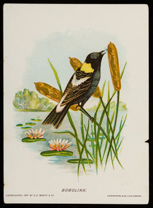 Trade card for the bobolink, G.E. Marsh & Co., 395 Chestnut Street, Lynn, Mass., 1887