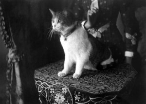 Portrait of a cat, William Solomon House, 3 Autumn St., Roxbury, Mass., ca. 1880