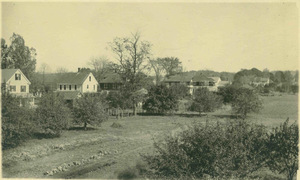 Homes on Pine Street in North Amherst