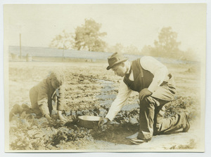 Booker T. Washington and son picking strawberries