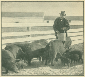 Booker T. Washington feeding pigs