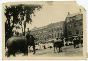 Circus animals on Main Street
