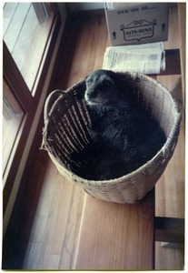 Chewie the dog in basket on dining table, Salmon Creek house