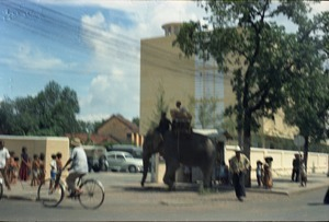 Elephant in downtown Phnom Penh