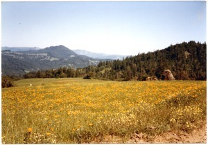 View of Bear Buttes and wildflowers in May