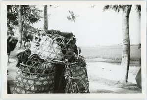 Bicycle freight, Thái Bình province