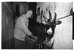 100 year old woman from Kilcoo, Co. Down milking her goat in the hallway of her Kilcoo home, and some shots of her using a bellows to light the fire