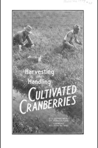 Harvesting and Handling Cultivated Cranberries