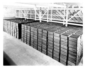 Berries in storage at L. B. Backers, Bourndale, Mass 1937