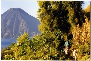 Man walking with goats on path, with Volcán de Atitlán in the distance