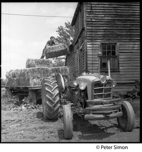 Haying in Virginia: throwing bales from a flatbed into the barn