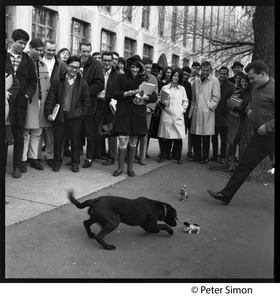 Boston University students watch a dog reacting to windup toys on the street