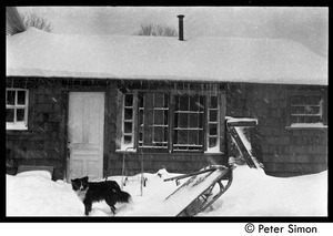 Dog outside during a snow storm, Packer Corners commune