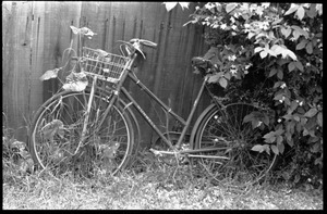 Bicycle in the weeds, leaning against a back yard fence