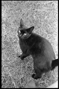 Black cat on the lawn