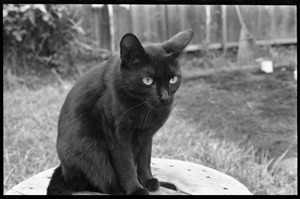 Black cat sitting on a stool in a back yard