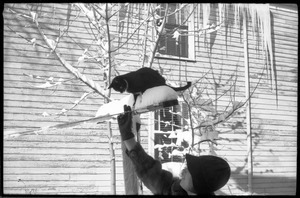 Cat perched on a post outside after a heavy snow, with icicles dangling from the roof and woman in a heavy fur coat attending