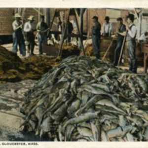 Fish on wharf, Gloucester, Mass.