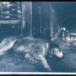 Old dog, Hawkes home, Walnut Place, North Saugus