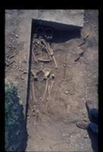Skeletal Remains at Trench 14, 1972