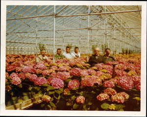 Condito family members with plants for sale