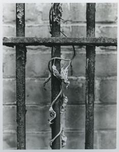 Wilted leaves and rusted bars