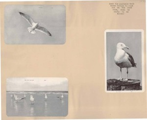 Scrapbooks of Althea Boxell (1/19/1910 - 10/4/1988), Book 9, Page 57