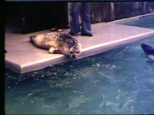 Andre the Seal Comes Home
