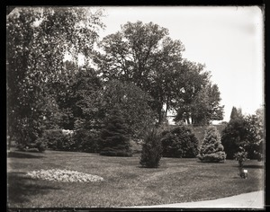 Plantings on the grounds of Massachusetts Agricultural College