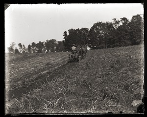 Harvesting potatoes with horse drawn harvester, Massachusetts Agricultural College