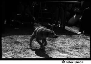 Resistance on the Boston Common: dog running around the protest