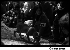 Resistance on the Boston Common: a dog wandering past a protester with New England Resistance armband