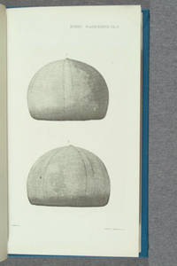 [Albertype and heliotype illustrations in Report on the Echini by Alexander Agassiz. Ophiurans and Astrophytons by Theodore Lyman]