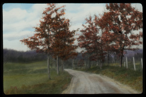 Belchertown (trees along dirt road between fields)