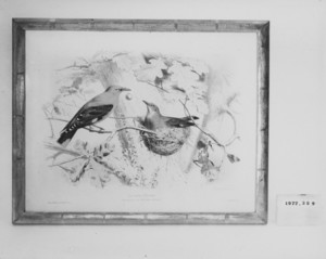 Engraving of Birds